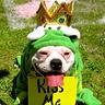 Photo #2 - The Frog Prince