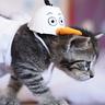 Photo #3 - Olaf