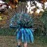 Photo #8 - Peacock