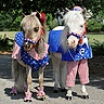 Photo #4 - Tiny Horses in Halloween costumes