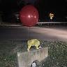 Photo #4 - Hey Georgie wanna play