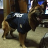 Photo #4 - German shepherd police dog -3