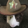 Photo #2 - Giddyup Guinea Pig