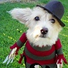 Photo #1 - Ginger as 'Freddy'