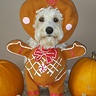 Photo #1 - Charley, the Gingerbread Pup
