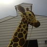 Photo #2 - Giraffe