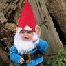 Photo #8 - Gnome