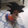 Photo #4 - Goku