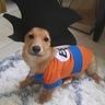 Photo #1 - Goku