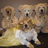 Photo #1 - Happy Halloween from Goldi'Knox' and the three bears