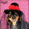 Photo #2 - Goth Ween
