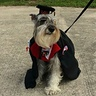 Photo #1 - The graduate