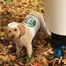 Photo #3 - Closeup Short Puppuccino