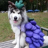 Photo #1 - Grape Jelly Sitting