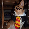 Photo #1 - Jayden - Gryffincorg!