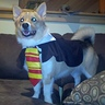 Photo #3 - Jayden - Gryffincorg!