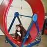Photo #2 - Completed wheel and Guinea Pig Costume