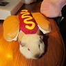 Photo #1 - Fred, the guinea pig hot dog.