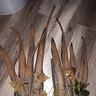Photo #3 - Hairy Groot