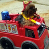 Photo #2 - Hairy the Fireman