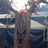 Photo #1 - Haunted tree