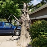 Photo #1 - Haunted Tree