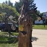 Photo #2 - Haunted Tree