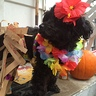 Photo #1 - Hawaiian Dog