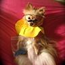Photo #2 - Heisendog