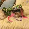 Photo #3 - Hippie