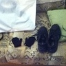 Photo #5 - Holy cow black shoes and mittens for hooves.