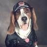 Photo #1 - Biker Dog