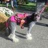 Photo #1 - Horse Pony