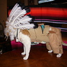 Photo #7 - Indian Chief