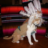 Photo #1 - Thor-onimo, Indian Chief