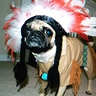 Photo #5 - Oliver the Indian