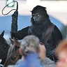 Photo #2 - Invasion of Planet of the Apes