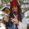 Photo #7 - jacks pirate dog
