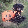 Photo #1 - Jackalweenie