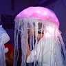 Photo #4 - Jellyfish