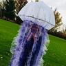 Photo #1 - Jellyfish