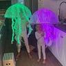 Photo #1 - jelly fish