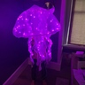 Photo #2 - Jellyfish