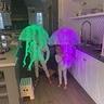Photo #4 - Jellyfish