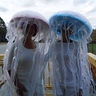 Photo #2 - Jellyfish costumes