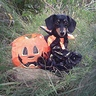 Photo #5 - Fall Jester puppy