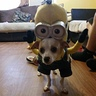 Photo #1 - Wero Minion Costume