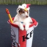 Photo #1 - KFC Siva 1