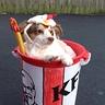Photo #2 - KFC Siva 2
