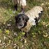 Photo #5 - battle dog mu